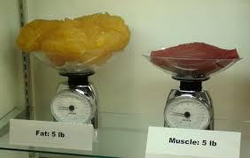 Fat No Muscle, No Gain